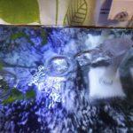 本日のメダカ31「ろ過による水質改善」