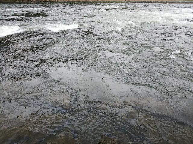初秋の河川釣行