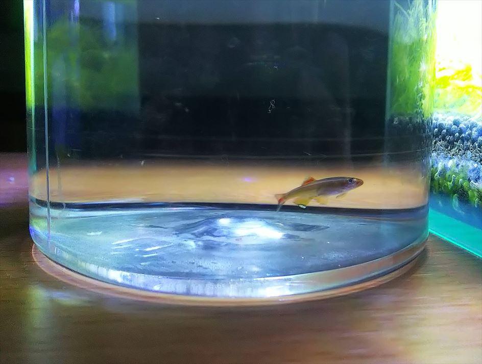 魚が水槽から出てしまった時の対処法、やってはいけないこと