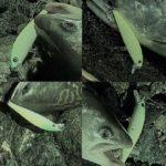 【ネイティブ】安くて釣れるルアーを教えマス!【トラウト】